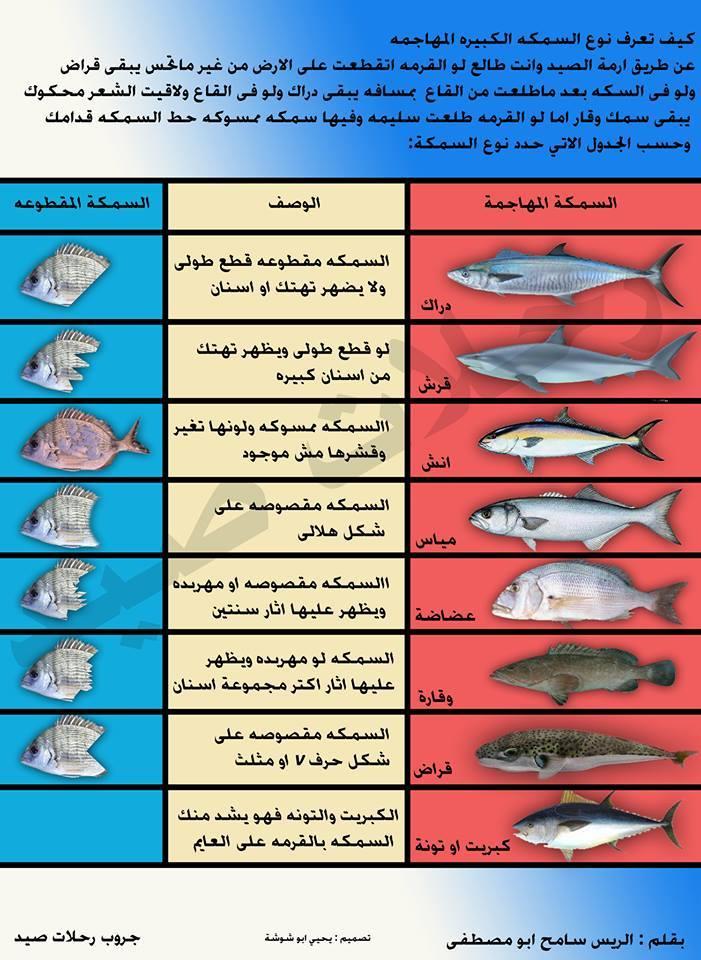 זיהוי טורף לפי נגיסה(ערבית)